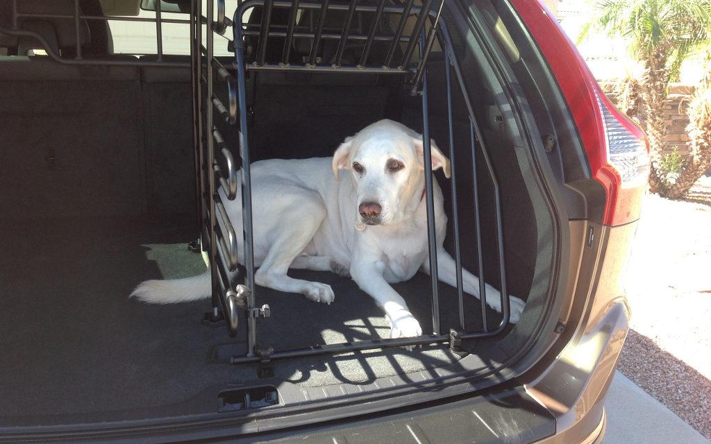 2013 Volvo Xc60 Suv Is A Doggone Safe Car