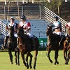 New Attendance Record Achieved at Scottsdale Ferrari-Maserati Polo Championships: Horses & Horsepower