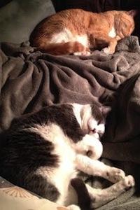 Joleencats