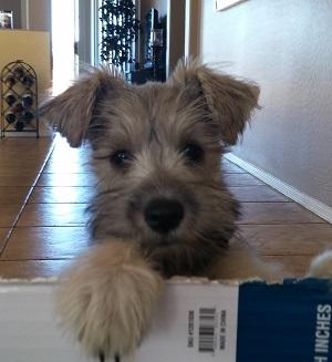 new dog