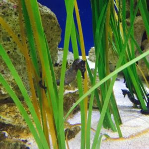 Seahorse at the Wildlife World Zoo, taken by Kristiana Faddoul.