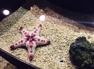 Starfish at the Wildlife World Zoo, taken by Kristiana Faddoul.
