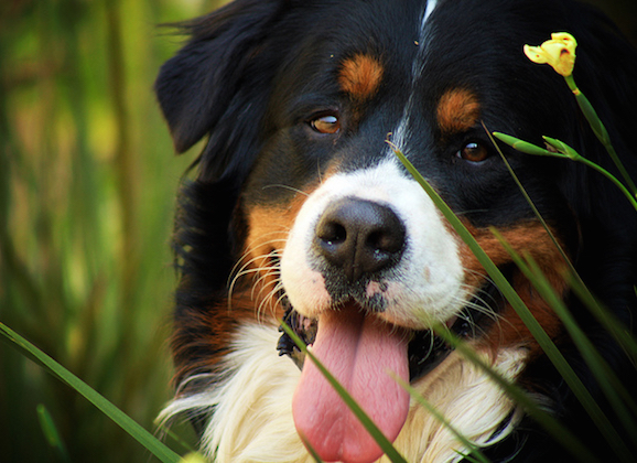 Keeping Your Outdoor Pets Comfortable