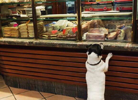 B.Y.D. (Bring Your Dog) Friendly Restaurants