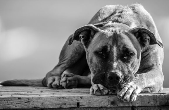 Arizona Votes 'Yes' to Animal Rescues, And You Should Too