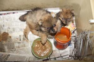 Puppies:food