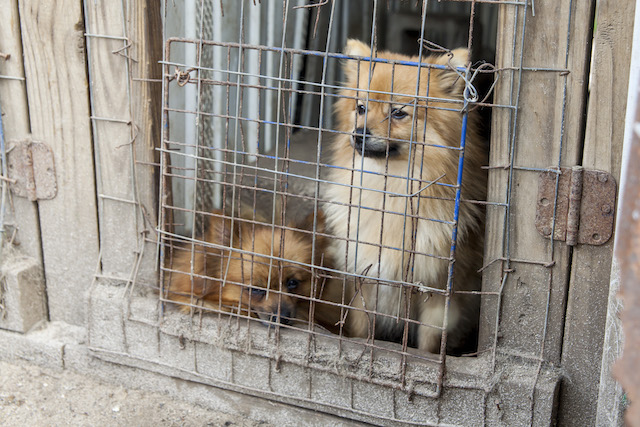 how to tell a puppy mill