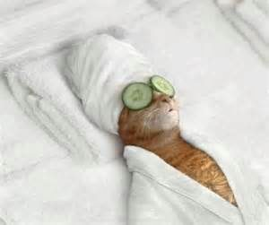 hilarious pampered cat