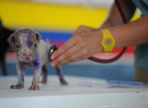Low-Cost Vet Clinic Options For Your Pet