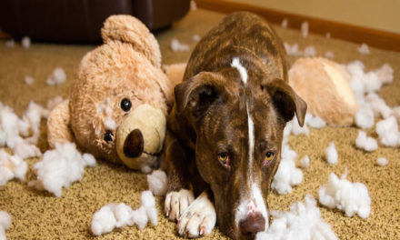Guilt: Your Dog May Not Understand It The Way We Think They Do