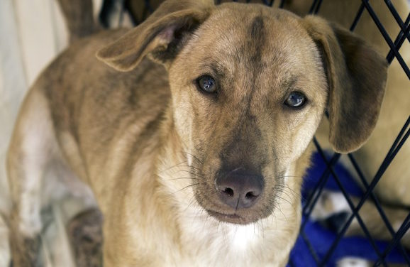 San Fransisco Votes Only Rescue Dogs To Be Sold In Pet Stores