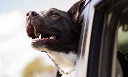 Do Not Leave A Pet Inside of a Scorching Car