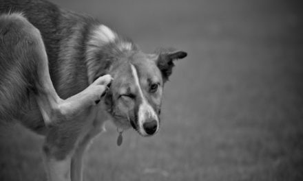 Natural Ways To Soothe Your Pet's Itchy Skin