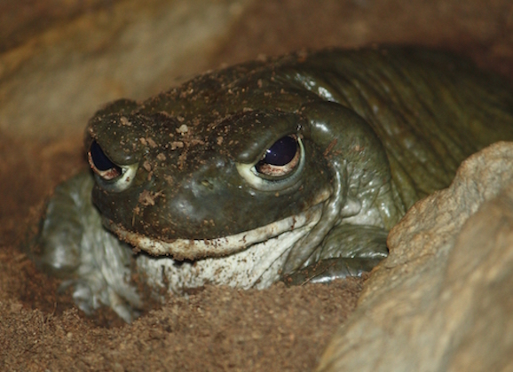 Watch Out For This Toxic Toad Around Your Pets