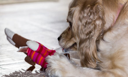 Fun Indoor Games To Play With Your Pet