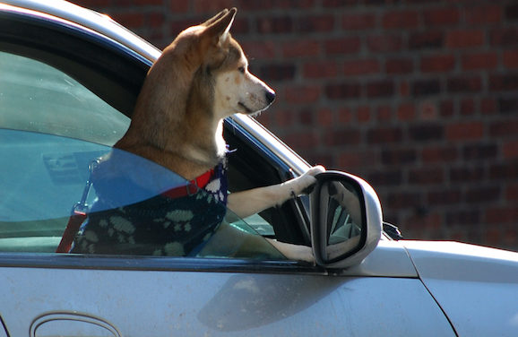 California Passes Good Samaritan Law For Those Who Help An Animal Trapped Inside A Hot Car