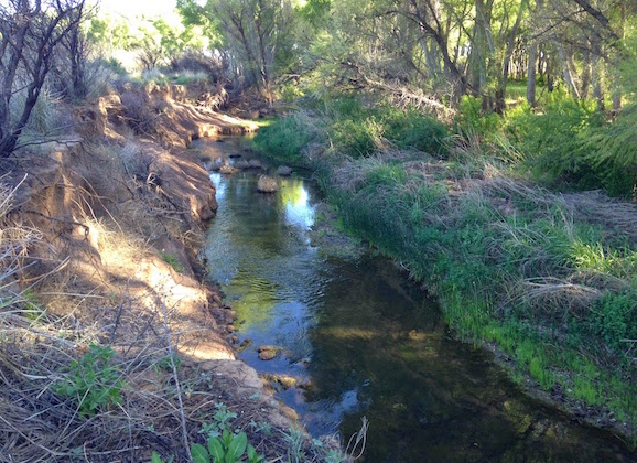 San Pedro Riparian National Conservation Area- A Green Wonderland