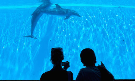 California's Governor Signs Bill Ending Orca Breeding and Captivity