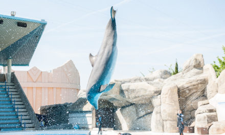 Dolphinaris AZ- Should Dolphins be in the Desert?