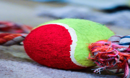 DIY Dog Toys For This Christmas