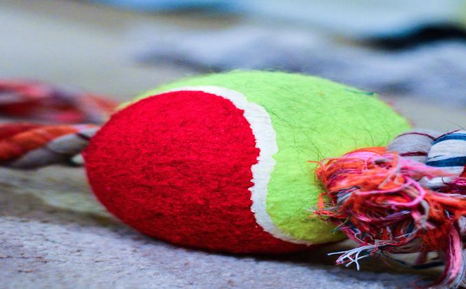 DIY Dog Toys For This Christmas