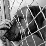 California: Only Rescue Animals To Be Sold In Pet Stores Statewide