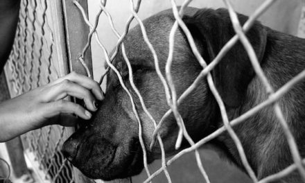 Florida Bill Aims To Make Animal Abuse A Nationwide Felony