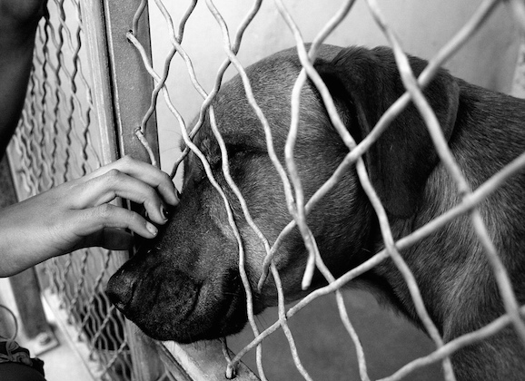 County Shelter: Over 800 Animals Need Homes
