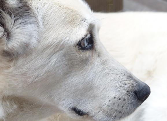 Maricopa County Animal Shelter Aims For A No-Kill Community
