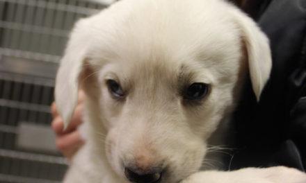 Florida Legislation Proposes Animal Abuse Registry