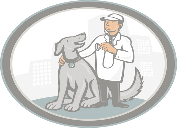 Mobile Vet Services Care For Pets In The Comfort Of Their Homes