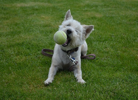It's Getting Warmer: Reminders to Keep Your Dog Safe