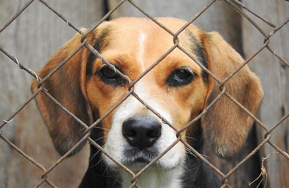 Maricopa County Animal Care Offering Free Pet Adoptions This Weekend