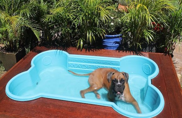 These Dog Pools Are Great For Summertime Play