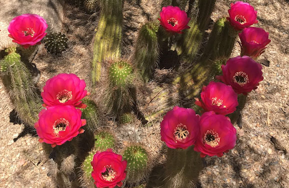 Fuel Your Love For Local Plant Life at the Desert Botanical Garden