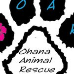 Tempe Rescue Shelter Closing, Needs Help Finding Homes For Remaining Animals