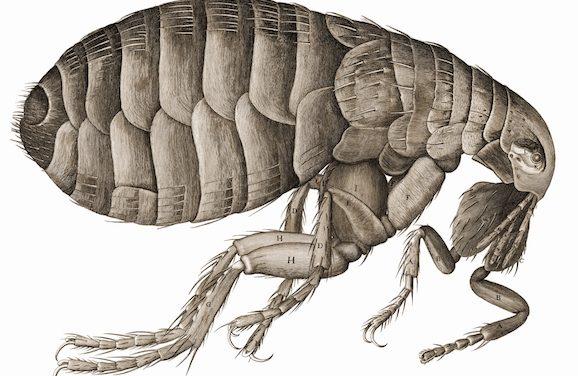Plague Hits Northern Arizona