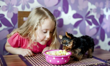 Thanksgiving Leftovers That Are Not Safe To Feed Your Dog