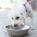 New Petition Asks For Food Stamps To Include Pet Food