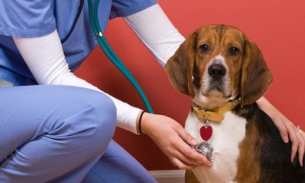 Dog Flu Is Real, How To Spot It
