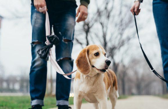 PetSmart Giving Away Free Dog Booties