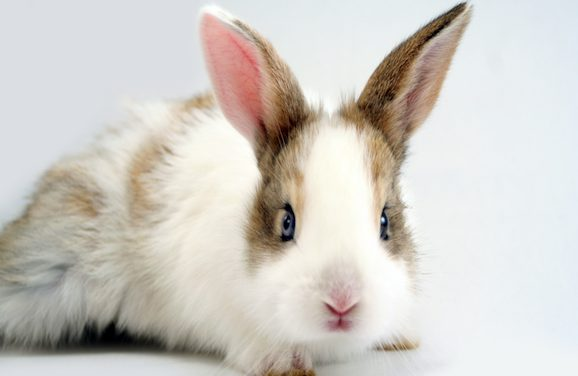 California Passes Bill Banning Animal Testing on Products
